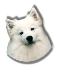 American Eskimo Dogs Organization Of Vancouver, forum, pictures, videos, about the breed, breeders, events, health, feeding, exercise, walks, training, links